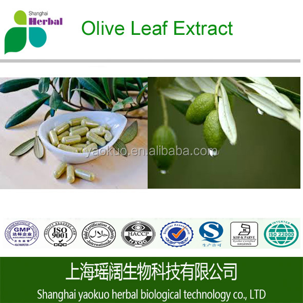 Best Selling Oleuropein 20%-98% Olive Leaf Extract/Plant Extract Powder