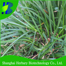 Seeds for winter ryegrass, perennial rye-grass, ray grass