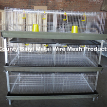 Battery Cages For Broiler Chickens From Chick To Adult Broilers