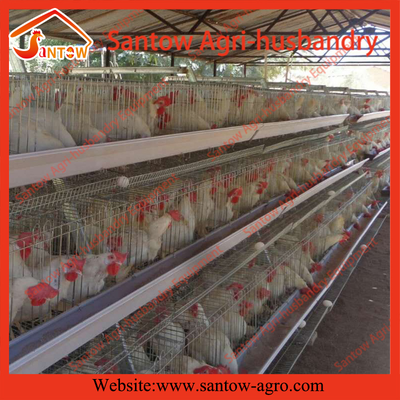 A frame 3 tiers chicken layer cages poultry cage breeder hens for Africa Nigeria Uganda Zambia Ghana