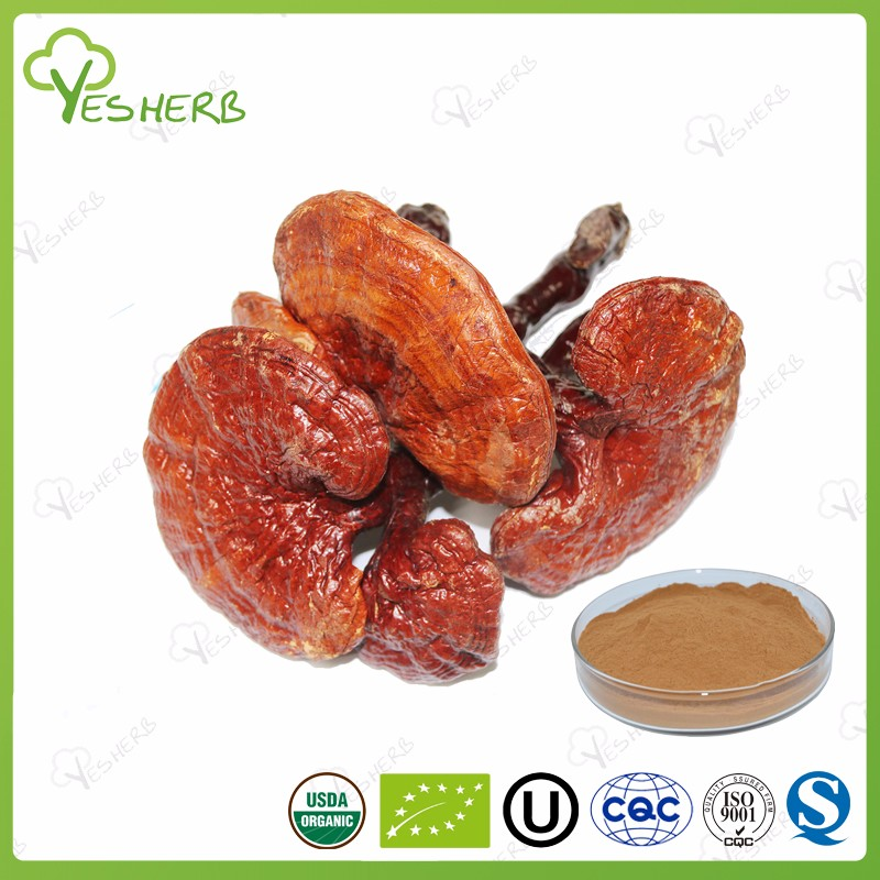 Top quality ganoderma red mushroom extract powder wild lingzhi