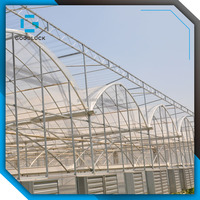 High Quality Multi-Span Tunnel Greenhouses Structure