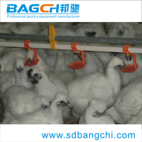 Best sale poultry nipple drinking system/Poultry farm drinking system/Water line
