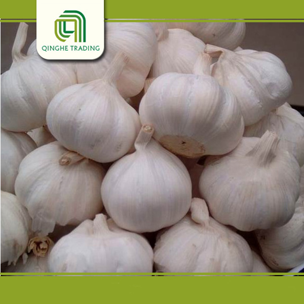 Hot selling fresh pure white purple garlic with low price