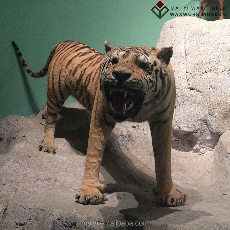 Customed Life Size Tiger Animal Statues for Exhibition