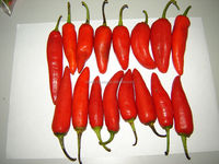 Fresh small chili/ Red Pepper
