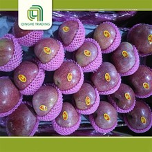 Professional fresh fruits and vegetables fresh qinguan apple with high quality