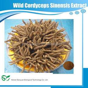 Wild Cordyceps Sinensis powder extract with 40% Polysaccharides/5:1 10:1 20:1