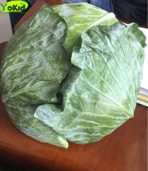 Chinese New Harvested Fresh Cabbage With HACCP