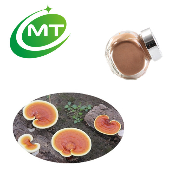 100% natural high quality Mushroom Extract Powder