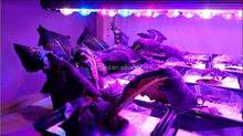 New greenhouse led lighting growbar led grow bar 84W DC 12v led grow lights for plants flower hydroponics system