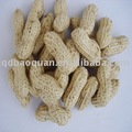 Selected chinese Peanuts inshell