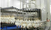 halal chickens slaughtering equipment for abattoir house