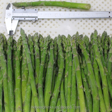 IQF frozen Chinese high quality green asparagus