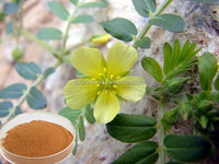 Pure & natural very good effect tribulus terrestris plant extract