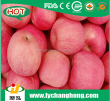 Famous brand red fuji apple/apple farms for sell