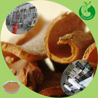 Hot Selling Cinnamon Extract Product Specification Cinnamon Powder