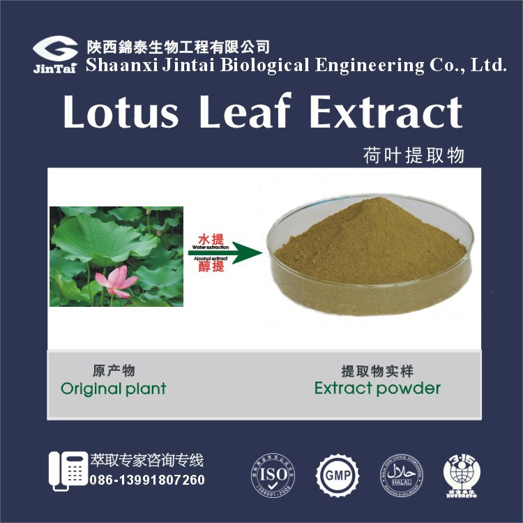 fresh organic food additive, cas no 475-83-2, lotus leaf extract