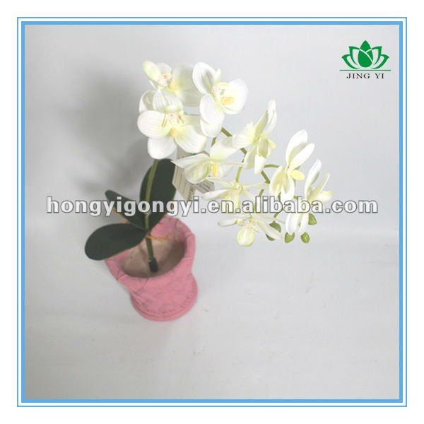9 heads single Butterfly Orchid with leaf and root