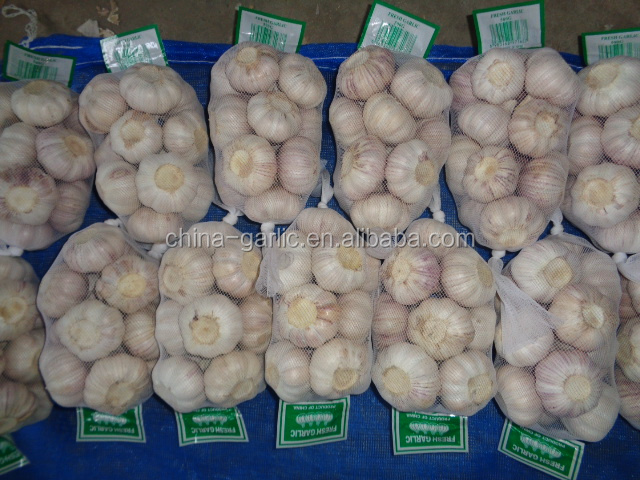 The Year Round Supply Shandong Fresh Natural Pure White Garlic Wholesale 2016 Garlic Price