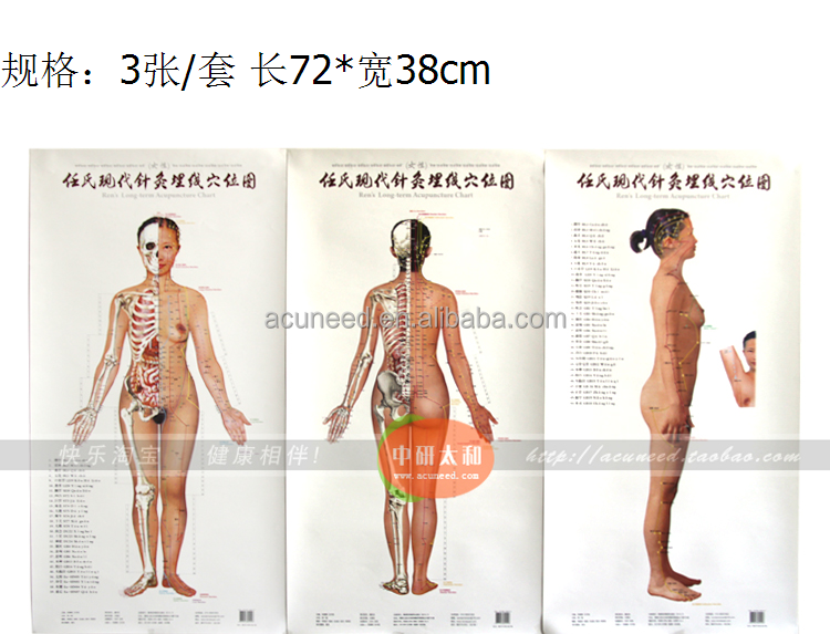 Medicinal chart/Point diagram/Acupuncture point/Body Acupuncture point