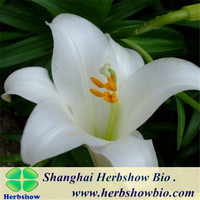 Chinese High Grade Lily Bulbs
