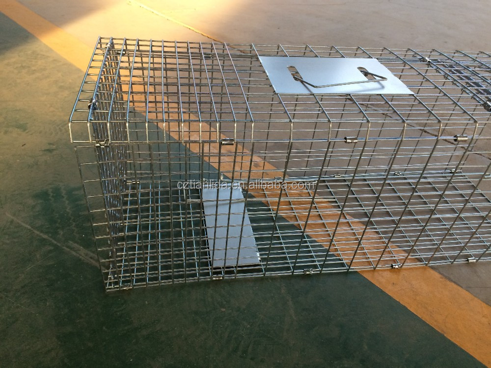 Austrilia standard collapsible possum trap cage ebay