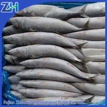 frozen mackerel prices pacific mackerel scientific name of mackerel fish