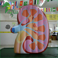 Factory Customized Inflatable Kidney Model / Air Blowed Advertising Display Organ Balloon Replica
