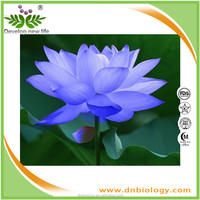 Natural Blue Lotus Extract