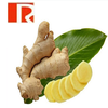 water soluble Gingerols 1% good price Ginger Extract Powder