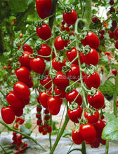 Calcium Boron Amino Acid Chelate Tomato Fertilizers