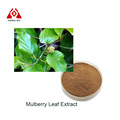 pure natural high quality Mulberry Leaf Extract