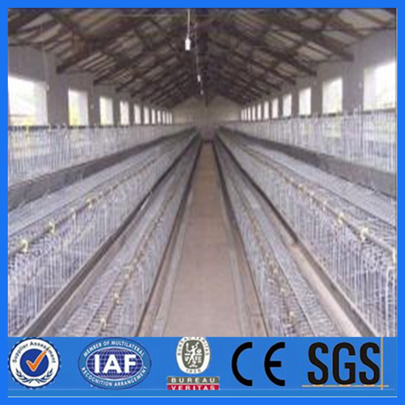 chicken cages laying hens wholesale bird cages/poultry farming equipment/ cage with high quality