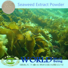 100% Natural Seaweed Extract Powder/Kelp Seaweed Extract/Seaweed Extract Powder