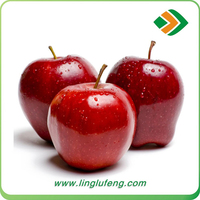 Chinese new fruit products fresh huaniu apple with good quality