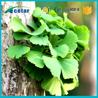 CP2015 USP standard Ginkgo Biloba Extract for anticardiovascular ginkgo extract powder