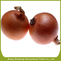 wholesale best quality yellow onion