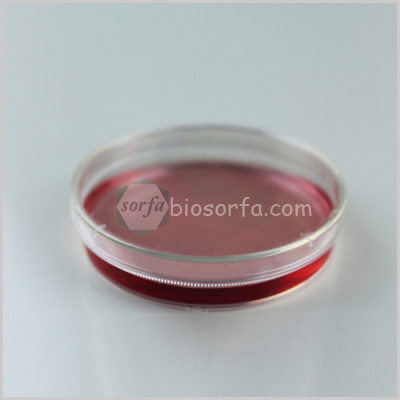 35mm 60mm 100mm 150mm lab disposable tissue culture cell culture dish