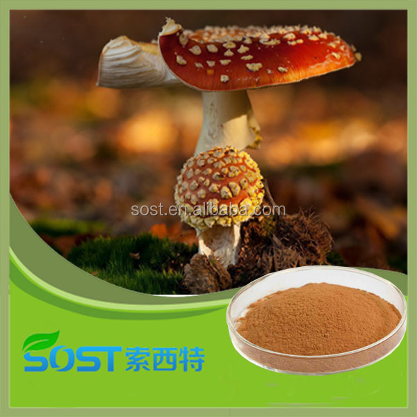 New products on China market Lucid ganoderma p.e.