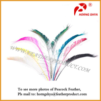 Indian Peacock Arrow Feather