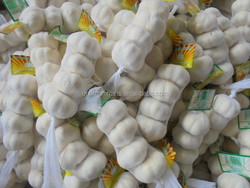 wholesale purple garlic 2016 fresh china garlic for sale