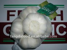 Chinese normal white garlic supplier best price