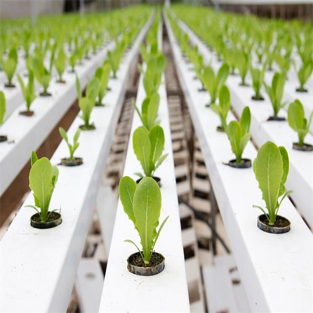 Greenhouse NTF PVC channel Global Gutter Hydroponics Suppliers hydroponic channel  for planting vegetables