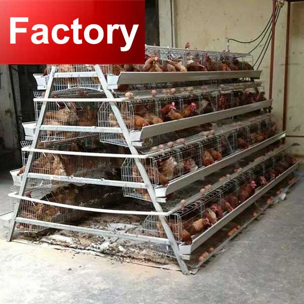 Factory Stong steel feed trough cages for broiler chicken breeding