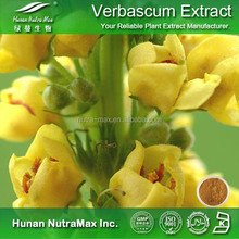 China Supplier Mullein Leaf Extract Powder (4:1 5:1 10:1 20:1)
