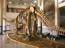 Exhibition equipment dinosaur fossil skeleton replica raptor