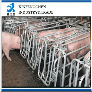 Free access stalls pig pens