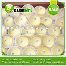 Green Apple Import From China