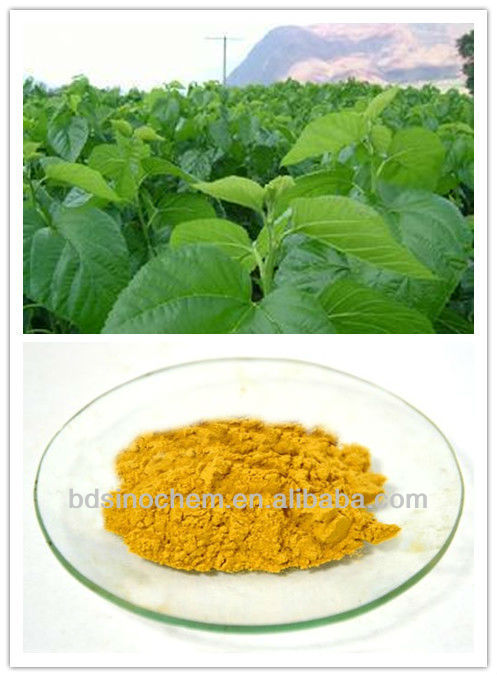 Mulberry Leaf Extract / DNJ / Treatment of diabetes